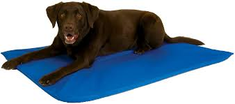Cool Bed Kh Pet Products Cool Bed Iii Dog Bed Blue Large Chewycom