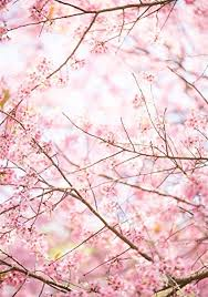 Aofoto 5x7ft Spring Sakura Pink Flower Background Cherry Blossom Tree Branches Photography Backdrops Girls Tea Party Kids Newborn Baby Portrait