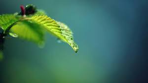 leaves photography branch insect green leaf flower background blur puter wallpaper close up macro photography plant