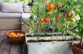 that grow easily in your balcony garden