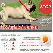 Summer Pet Tips Hot Asphalt And Your Dog