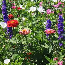 hummingbird garden. Interesting Garden On Hummingbird Garden