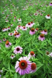 flowers at the royal botanical gardens in burlington ontario canada