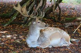 5 deer dream interpretation