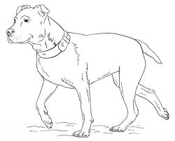 Amerikaanse Pitbull Terrier Kleurplaat Gratis Kleurplaten Printen