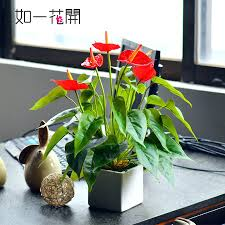 artificial plants for office decor. best small indoor office plants desktop potted for singapore mini artificial decor f