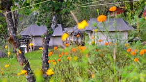 Hotel Dev Conifers Green Green Getaway Camps Adventure Camps In India Camps In India