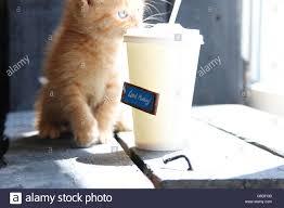 Guten Morgen Text Kaffee Und Süße Kätzchen Stockfoto Bild