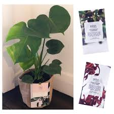 unique mother s day gift ideas melbourne 2018 send plants not flowers delivered on mother s day