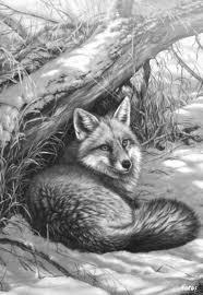 Pin By Sadie Bown On Art In 2019 Drawings Animal Drawings Pencil