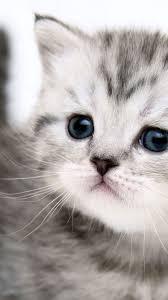 cute cat wallpaper iphone. Wonderful Iphone Cat IPhone Wallpaper 2 Inside Cute Iphone H