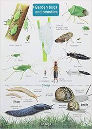 Garden Bugs And Beasties Chart Amazon Co Uk Rebecca