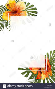 Wedding Invitation Card Floral Jungle Blank Frame Postcard