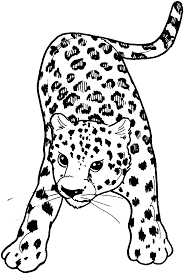 Snow Leopard Coloring Pages Dapmalaysiainfo