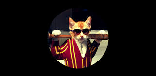 <b>Cool Cat</b> Wallpaper - Apps on Google Play