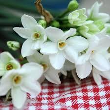 White Paper Flower Bulbs Paper White Bulbs Mousee Club