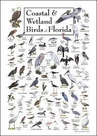 Coastal Wetland Birds Of Florida Birds Bird