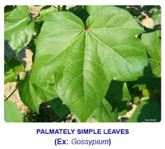 ncert notes free cbse notes leaf characteristics of leaf functions of