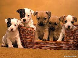 Cute Dogs And Puppies Wallpapers For ...