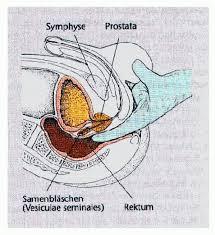 nach ejakulation schmerzen harnröhre