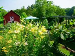 organic farming client news 29 2017 bennett nc norma burns the architect farmer who intends to gift her 13 acre organic farm in bennett north carolina