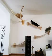 overhead cat playground room goldtatze 6