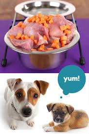 bone meal for dogs. 0001-82880592 Bone Meal For Dogs