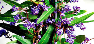 Best 25 Plant Trellis Ideas On Pinterest  Backyard Plants Diy Climbing Plants For Privacy