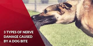 nerve damage caused by a dog bite