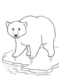 Small Picture Coloring Pages Winter Polar Bear Animal Coloring pages of