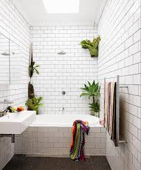 Bathroom Plants Should You Have One A Home Blog