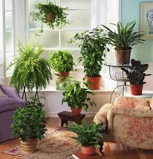 Photo ideas plants for interior decoration