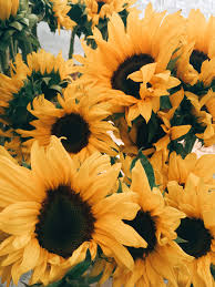 Aesthetic Sunflower Profile Pics (Page ...