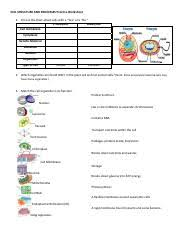 Cell Structure Chart Cell Organelles Pdf Cell Structure And Processes Practice