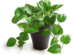 low maintenance office plants. Photo By: Image Courtesy Of Costa Farms Low Maintenance Office Plants E