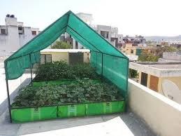 growing fresh organic vegetables on