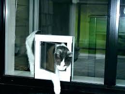 thru the wall dog doors through wall dog door thru the wall dog doors through wall