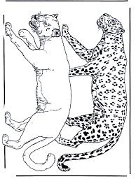 Leeuw En Luipaard Kleurplaten Katachtigen
