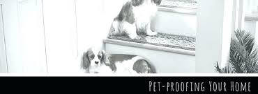 pet proof carpet proofing your home pad dog urine rug resistant area rugs pet proof carpet home depot