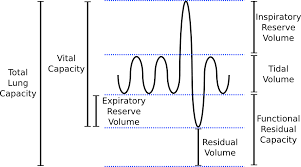 Normal Lung Volumes And Capacities Chart Lung Volumes Pathway Medicine