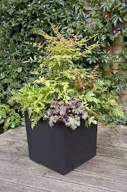 ShadeLoving Fuchsias Make Great Container Plants  Container Container Garden Shade Plants