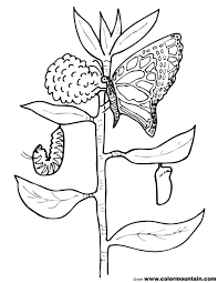 Small Picture Coloring Pages Free Printable Caterpillar Coloring Pages For Kids