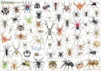 12 Australia Spider Chart Spider Chart Australia