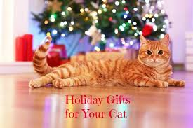 56 Best Cats Protection Gifts Images On Pinterest  Charity Tabby Christmas Gifts Cats