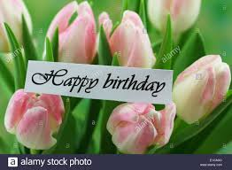 happy birthday pink and green happy birthday card with pink tulips stock photo 69727852 alamy