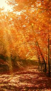 23++ Iphone Xs Autumn Wallpapers ...