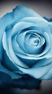 iPhone wallpapers blue flowers #Flower ...