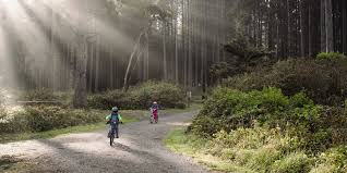 Wide shot of two young children riding bikes on a forest trail. \ Cycling with Kids: Carriers \u0026 Attachments | REI Expert Advice