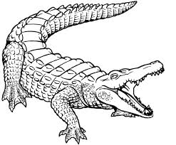 Small Picture Crocodile Coloring Pages Archives Printable Coloring page for kids