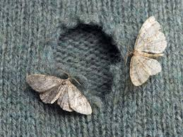 how to get rid of moths in the house best way to kill pantry and clothes moths